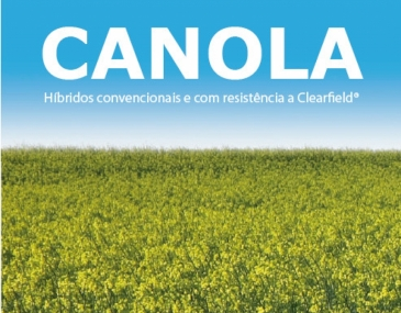 Híbridos de canola  no Brasil